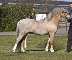 Powys (NL) Sant (OS)